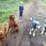 Anton sommarjobbar på hundcentret