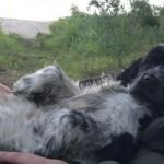 En av våra gäster från i somras tar igen sig lite i Fredriks knä.