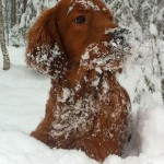 Solo gillar snö