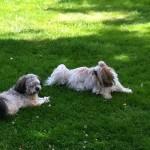 Tilda och Molly njuter